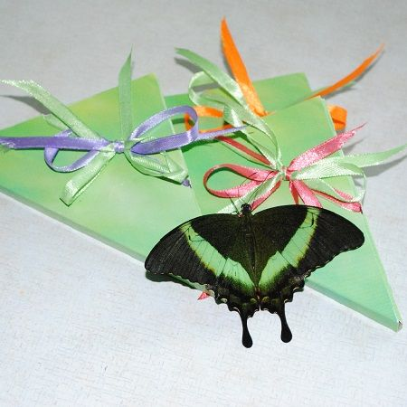 Product Butterfly Papilio palinurus