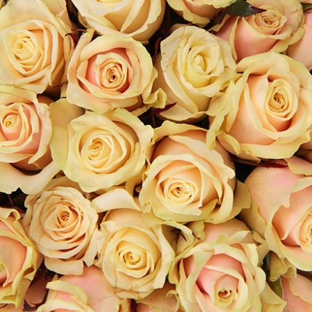 Bouquet Cream roses by the piece